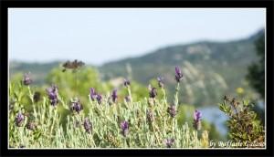 Panorama Sardegna, con fiori viola